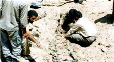 شناسایی بقایای پیکرهای 80 شهید دوران دفاع مقدس در منطقه فاو