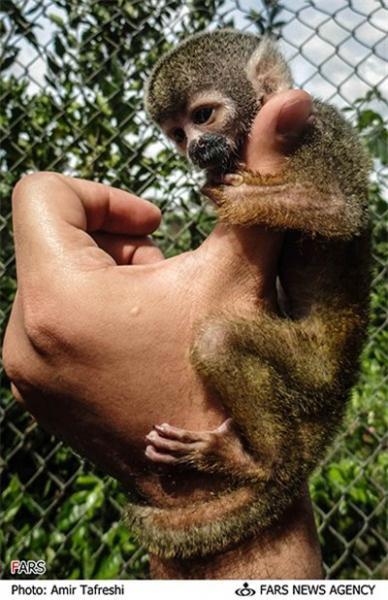 عکس حیوانات جنگل امازون