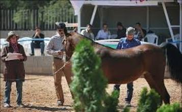 زنان سعودی به اسب سواری راضی شدند