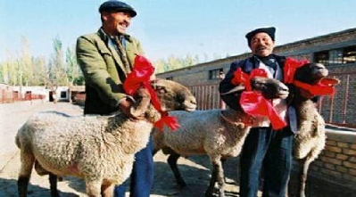 گوسفندانی که از پورشه و مازاراتی گرانتر هستند+عکس