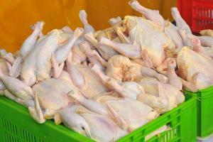 مرغ ایران صادراتی می شود