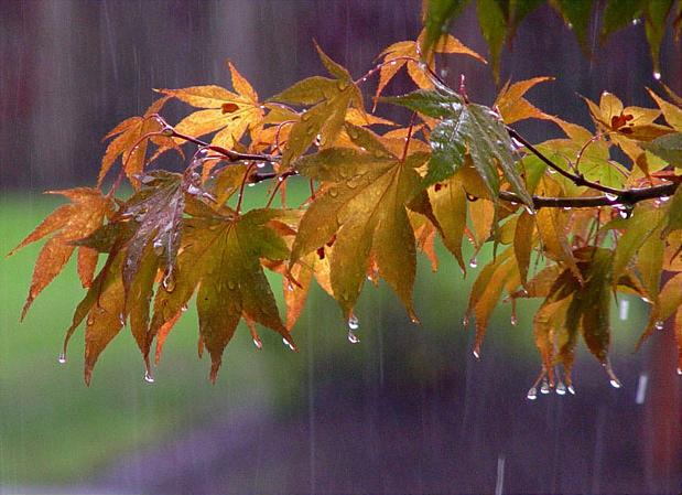 تداوم بارش در غرب کشور
